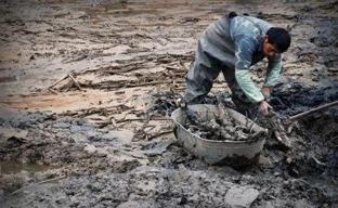 黄河故道的挖藕人