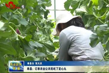 单县:订单农业让农民吃了定心丸
