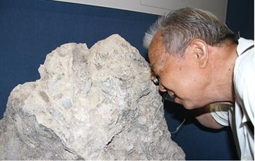 菏泽现脊椎动物化石