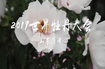 菏泽市:到曹州牡丹园赏盛世牡丹