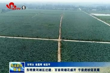 东明黄河滩区迁建:百亩荷塘惹人怜 千亩虎杖促发展