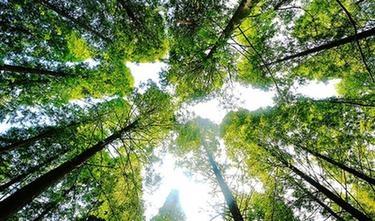上半年全国森林旅游游客量超过9亿人次
