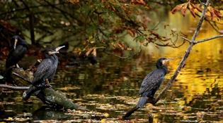 我国将进一步推动植物多样性保护
