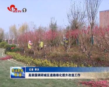 高荣国调研城区道路绿化提升改造工作