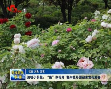 """清明小长假:""""疫""""净花开 曹州牡丹园迎来赏花游客"""