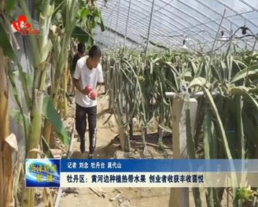 【走向我们的小康生活】黄河边种植热带水果 创业者收获丰收喜悦