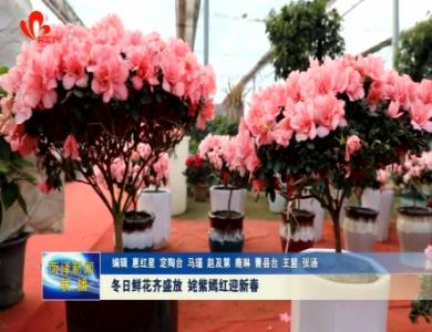 冬日鲜花齐盛放 姹紫嫣红迎新春