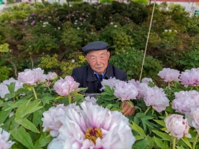 77岁的菏泽牡丹农技师,他的一天是这样的....