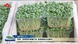 菏泽: 培育特色种植产业 加快推进乡村振兴